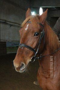 Лошадь по кличке Рыжая