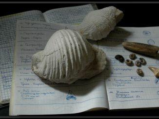 Дневники коллекционера